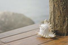 Sea shells on wooden table. With sea background Royalty Free Stock Photos