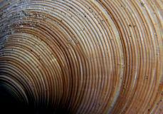 Sea Shells (30) Stock Photo