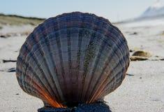 Sea Shells (31) Stock Photography