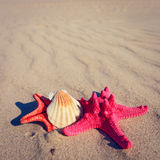Sea shells with yellow sand Royalty Free Stock Photos