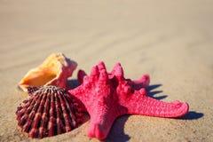 Sea shells with yellow sand Stock Photo