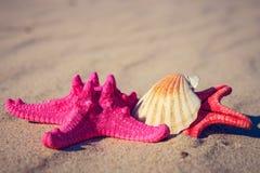 Sea shells with yellow sand Stock Photos