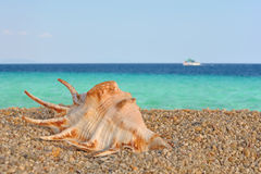 Seashells on the beach. Summer motive - Sea crustacean shells on the beach Stock Image