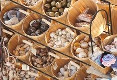 Sea shelves Stock Photos