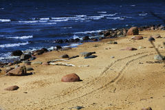 Sea shore. Panoramic scene of a sea shore line with waves and stones Royalty Free Stock Photography