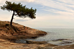 Sea shore. Lonely tree on a rocky sea shore royalty free stock images
