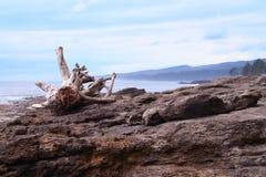 Sea Shore Royalty Free Stock Photos
