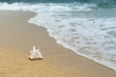 Sea, Shore, Beach, Ocean Royalty Free Stock Images