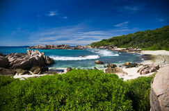 Sea shore with bushes, wild rocks and sand. Royalty Free Stock Photography