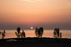 Sea shore in early sunrise. Young trees at the sea shore in early sunrise Stock Images