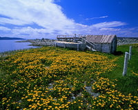 Sea shore with flovers. And old boat, Atlantic Canada, New Foundland royalty free stock photo