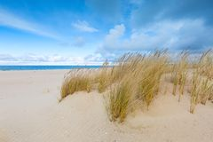 Sea shore with grass. Beautiful landscape Royalty Free Stock Image