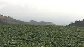 Sea shore. Green field between the hills. stock footage
