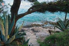 Sea shore, Hvar Island, Croatia. Turquoise sea shore with stones, Hvar Island, Croatia stock photography