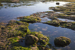 Sea shore by the low tide Royalty Free Stock Photography