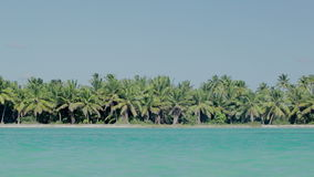 Sea shore with palms and clear blue water stock footage