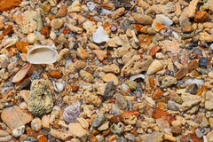 Sea shore pebbles, stones, corals and shells Royalty Free Stock Photo