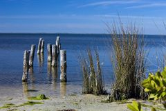 Sea Shore with Pilings and Reeds Royalty Free Stock Image