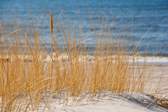 Sea shore with reeds Stock Image