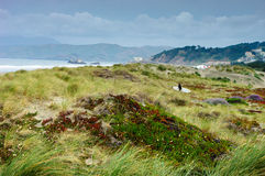 Sea shore in San-Francisco Royalty Free Stock Photography