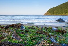 Sea shore with seaweed. Stock Image