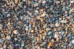 Sea shore texture background with little stones and shells in light of setting sun, selective focus.  Royalty Free Stock Photography
