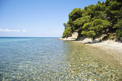 Sea shore with trees above Royalty Free Stock Photos