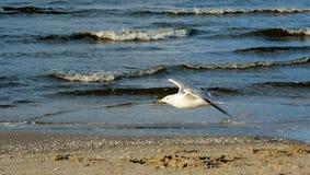 Sea, Shore, Water, Ocean royalty free stock photography