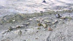 Sea shore wave stock video footage