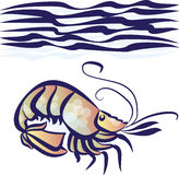 Sea shrimp. Vector illustration of sea shrimp Stock Photo