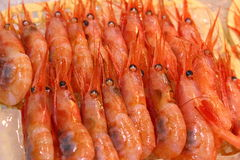 Sea shrimp Royalty Free Stock Images