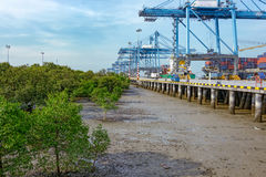 Sea-side mangrove forest at low tide Royalty Free Stock Image
