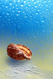 Sea sink resting upon song. On background epidemic deathes stock photo