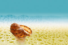 Sea sink resting upon song. On background epidemic deathes royalty free stock image
