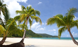 Sea, sky and palm Royalty Free Stock Images