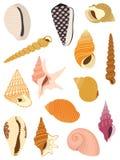 Sea slugs shells Royalty Free Stock Photography