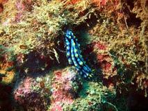 Sea slugs of the South-Chinese sea Stock Photo