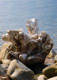 Sea and snag Stock Image