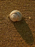 Sea snail on beach 1 stock photo