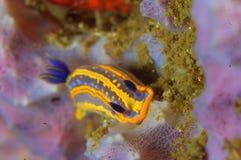 Sea snail Royalty Free Stock Photography