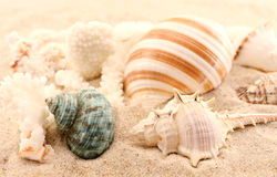 Sea snail houses Royalty Free Stock Images