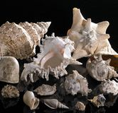 Sea snail houses Stock Photo