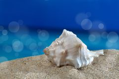 Sea snail. Macro shot sea snail on the beach in front of an azure sea with sunspots Royalty Free Stock Photography