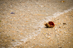 Sea snail. In the sand Royalty Free Stock Image