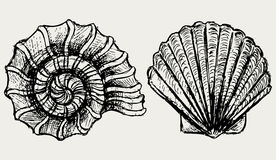 Sea snail and scallop shell Stock Images