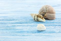 Sea snail shells on painted blue shabby wooden surface. Summer vacation background. sea snail shells on painted blue shabby wooden surface Stock Photography