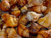 Showpiece snails made background. Beautiful sea snails made object background photograph stock photo