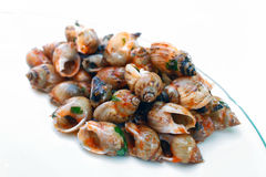 Sea snails isolated Royalty Free Stock Photo