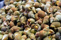 Sea snails Stock Photo