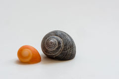 Sea Snails Royalty Free Stock Photo